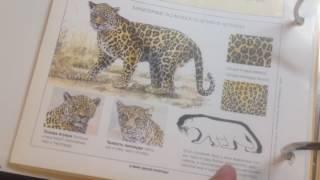 Обзор книги про животных