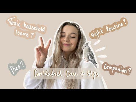 COCKATIEL CARE + TIPS ( WATCH BEFORE GETTING A COCKATIEL)