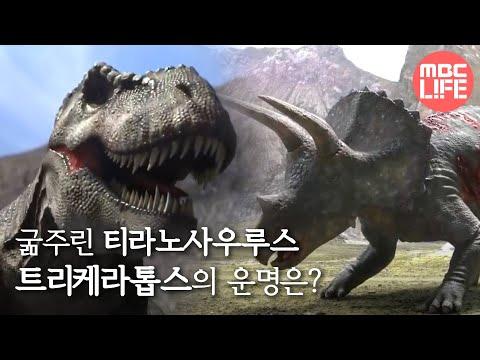 설특집 MBC 다큐스페셜 - 육식공룡과 뿔공룡의 목숨 건 혈투! 지금 펼쳐진다! 20140127