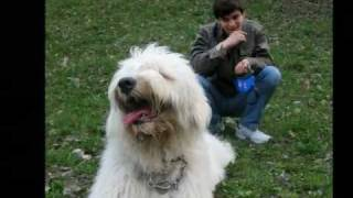 Южнорусская овчарка самая верная собака