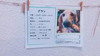 #保護犬カフェ立川店卒業生
