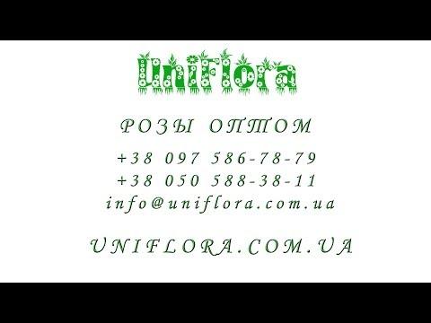Трио - подставка для цветов на 3 горшкаиз YouTube · С высокой четкостью · Длительность: 26 с  · Просмотров: 159 · отправлено: 31.10.2013 · кем отправлено: podstavka-dlya-cvetov.ru