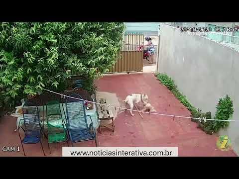Pitbull entra em residência, ataca e mata cãozinho
