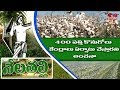 Telangana Govt Special Focus On Cotton Production | Nela Talli | HMTV
