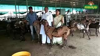 ಮಾದರಿ ರೈತನ ಗೋಟ್ ಪಾರಂ,