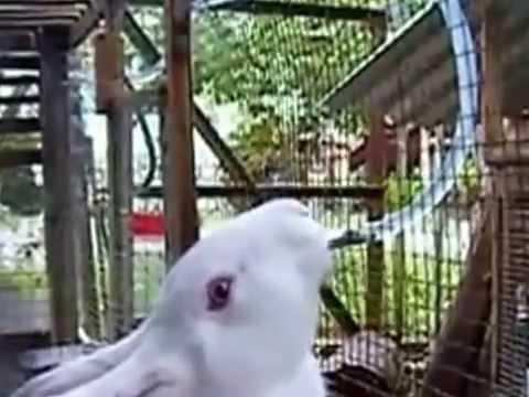 Идеальное решение проблем с поением кроликов. Всем известно, что кролики нуждаются в постоянном доступе к чистой воде. Лучше всего это может обеспечить ниппельная поилка для кроликов, что крепится к боковой стенке клетки на высоте, удобной для питомца. Ниппельные поилки для кроликов.