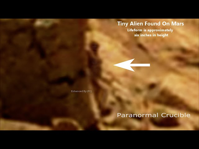 Tiny Alien Spotted On Mars?
