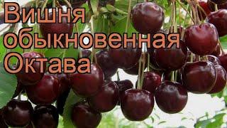 poate cires vă ajută să pierdeți în greutate)