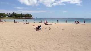 Ala Moana Beach에서