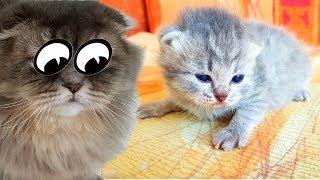 КОТЯТА УЧАТСЯ ХОДИТЬ. Как мы лечили Кошку