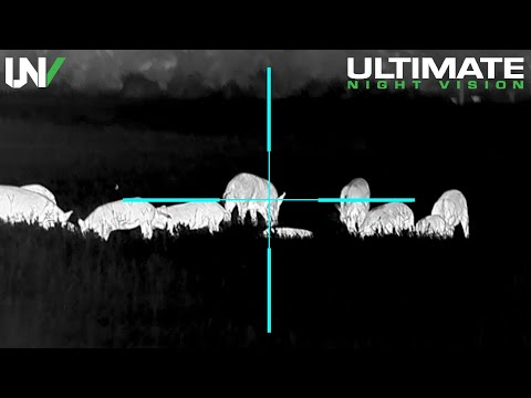 INSANE Hunt: 19 Hogs from One Group, Solo! NEW True HD Thermal with Mind-Blowing Image Quality
