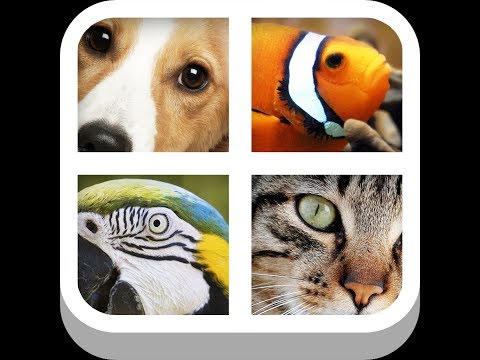 Close Up Animals - Level 1 Answers