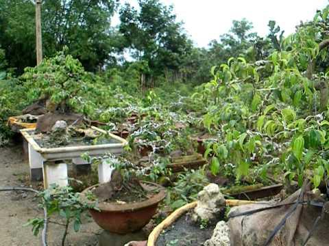 Vườn sanh kiểng Hoàng Minh - Bình Định