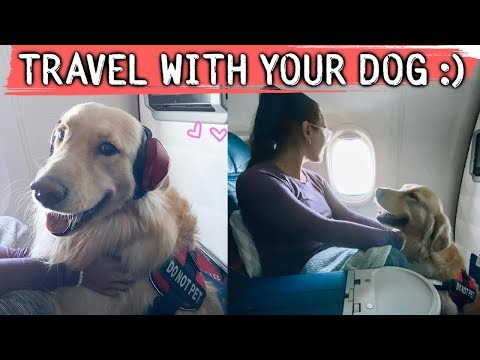 travelling pets