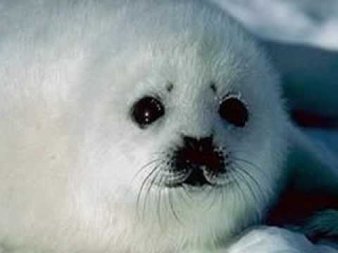 our arctic animals youtube