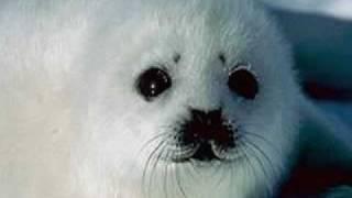 Our Arctic Animals