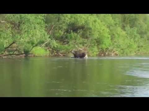 русская рыбалка 3 зачетная рыба