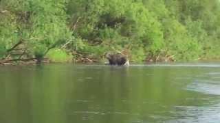 видео про рыбалку смотреть бесплатно
