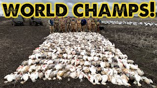 Snow Goose WORLD CHAMPS! - 473 Geese Killed!