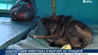 """""""Мир животных"""" в городской квартире: одинокая женщина завела 13 собак и кошку"""