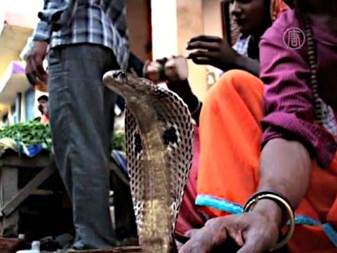 В Индии запрещено умирать! - Лилия-