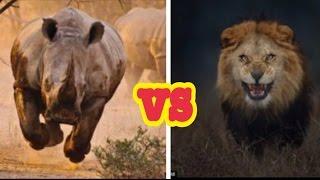 【閲覧注意】野生動物の掟 弱肉強食⑦ ライオンの非情さライオンがサイを...
