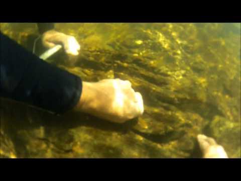 FIND GOLD Underwater - Gold Sniping | Liz Kreate