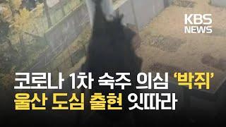 코로나 '1차 숙주 의심'  박쥐, 도심…