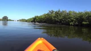 Strange Sea Creatures: Merritt Island Florida