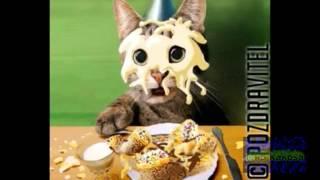 Поздраление с днём рождения от кота ! Поздравляйте всех