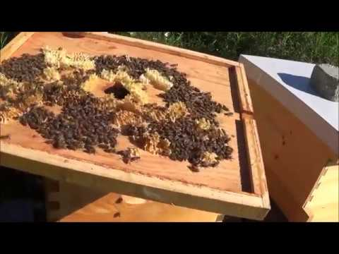 Beekeeping 5 rookie mistakes in this video that you can learn from