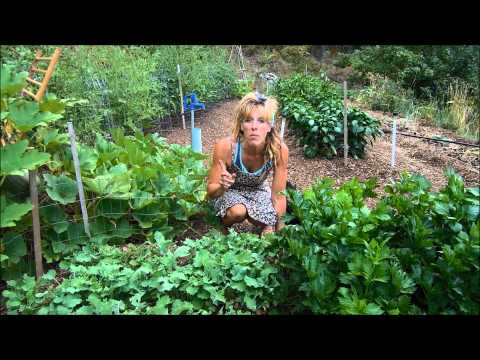 Back To Eden Gardening: Woodchips And Less Water
