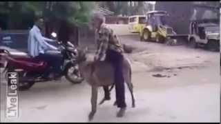 Repeat youtube video 【閲覧注意】ロバが人間を逆獣姦