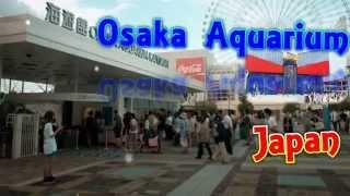 japan travel osaka aquarium kaiyukan whale shark in massive tank osaka