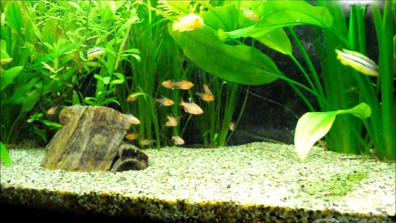 Fish aquarium in bangladesh - Bangladesh Dhaka Planted Tank Diy Co2 Injection