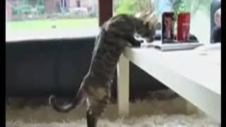 Шок! Применение запрещённых препаратов на кошачьих!