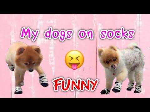 FUNNY : My dogs on socks แกล้งหมาให้ใส่ถุงเท้า