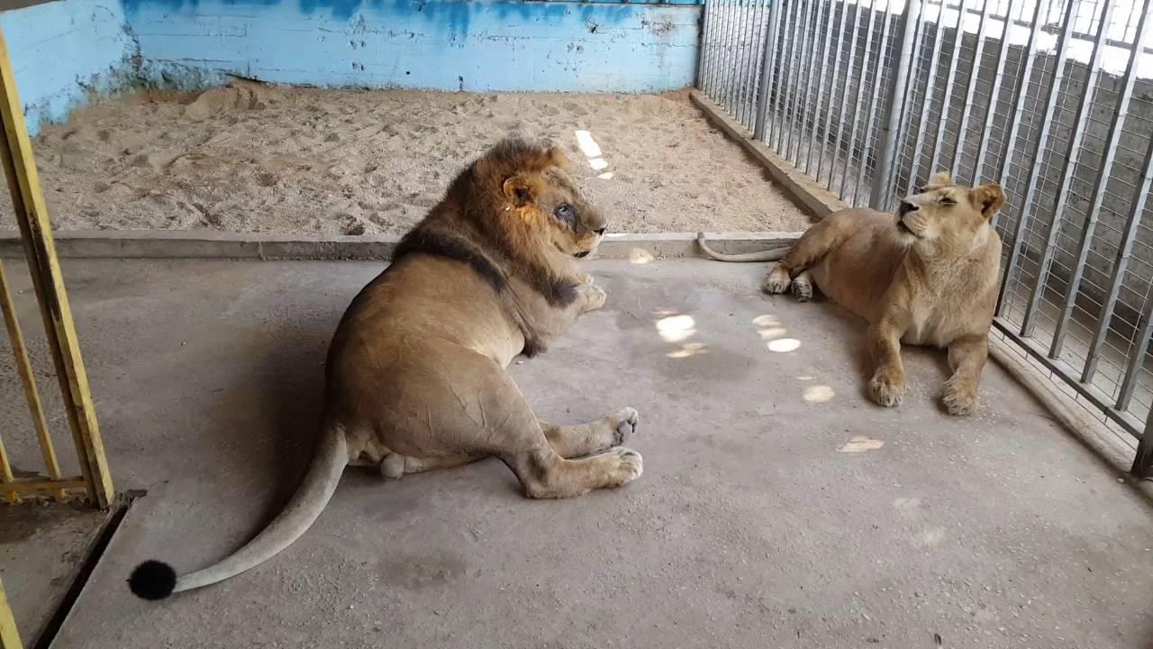 رحله الى حديقة حيوانات  قلقيليه مع جمال العمواسي