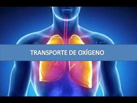 Transporte de oxígeno - Fisiopatología respiratoria