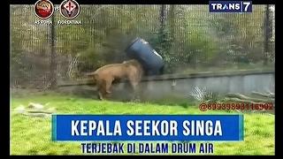 on the spot   aksi lucu hewan buas