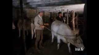 Marché aux bovins de Nasbinals 1977