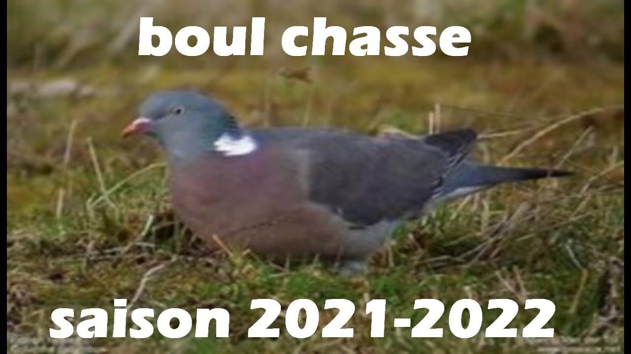 Download CHASSE AUX PIGEON RAMIER ET TIRE D'UN COQ FAISAN SAISON 2021-2022
