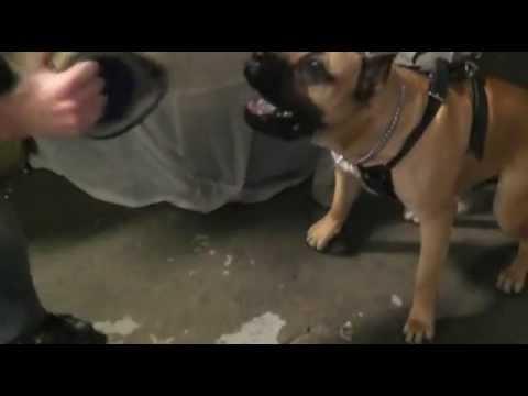 Duke Protection Training 007