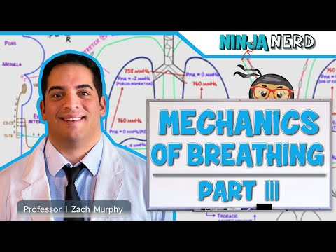 Respiratory | Mechanics of Breathing: Expiration | Part 3