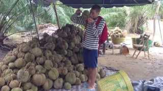 The Durian Farm! Brohers on a health trip in Asia part 6