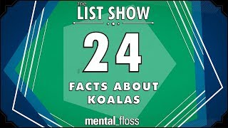 24 Facts about Koalas - mental_floss List Show Ep. 522