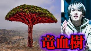 血を流す木【都市伝説】