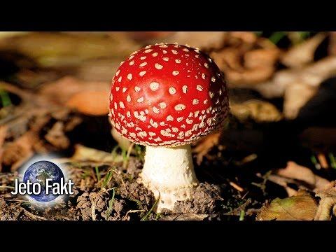 Nejjedovatější houby ČR (TOP 10)