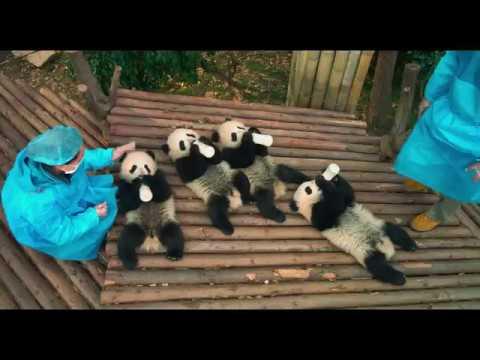 Pandas 3D — Trailer