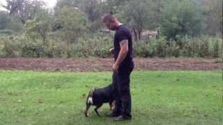 dresura pasa poslusnost dog training